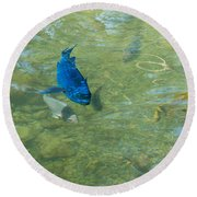 Parrotfish On A Swim Round Beach Towel by John M Bailey