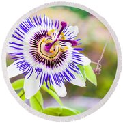 Passiflora Or Passion Flower Round Beach Towel