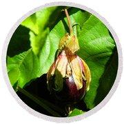 Passion Fruit 10-18-13 By Julianne Felton Round Beach Towel