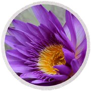 Passionate Purple Water Lily Round Beach Towel