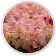 Pastel Coral Azaleas Refreshed By The Rains Round Beach Towel
