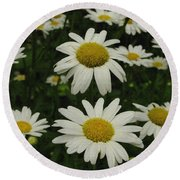 Patch Of Daisies Round Beach Towel