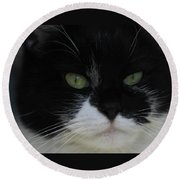 Green Eyes Of A Tuxedo Cat Round Beach Towel