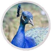 Pavo Cristatus II Indian Blue Peacock Round Beach Towel