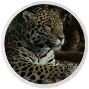 Paws Of A Jaguar Round Beach Towel