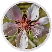 Peach Blossom Round Beach Towel
