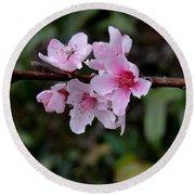 Peach Tree Blooms Miskitos Swoon Round Beach Towel