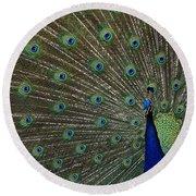 Peacock 17 Round Beach Towel