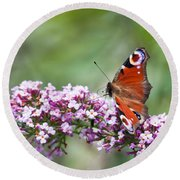 Peacock Butterfly  Inachis Io  On Buddleia Round Beach Towel