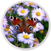 Peacock Butterfly Perched On The Daisies Round Beach Towel