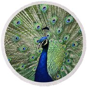 Peacock Display Round Beach Towel