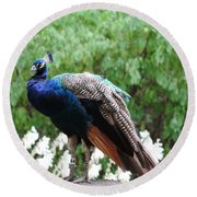 Peacock On A Rock 1 Round Beach Towel