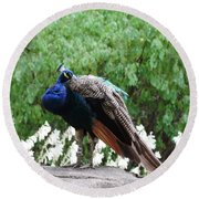 Peacock On A Rock 2 Round Beach Towel