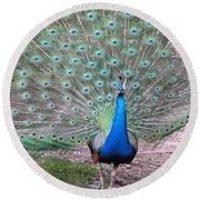 Peacock On Display Round Beach Towel
