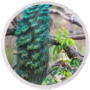 Peacock Perching On A Branch, Kanha Round Beach Towel