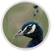 Peacock Profile  Round Beach Towel
