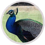 Peacock Profile Round Beach Towel
