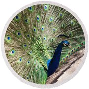 Peacock Show Round Beach Towel