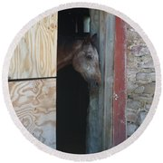 Peak A Book Horse Round Beach Towel