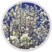 Pear Tree Blossoms In Spring Round Beach Towel