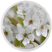 Pear Tree White Flower Blossoms Round Beach Towel