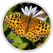 Pearl Border Fritillary Butterfly On An Aster Bloom Round Beach Towel