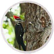 Pecking Woodpecker Round Beach Towel