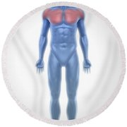 Pectoral Muscles Round Beach Towel