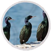 Pelagic Cormorants Round Beach Towel