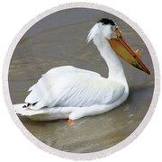 Pelecanus Eerythrorhynchos Round Beach Towel