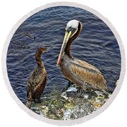 Pelican And American Black Duck Round Beach Towel
