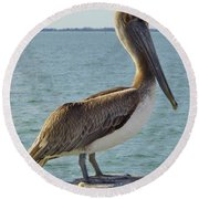 Pelican At The Gulf Round Beach Towel