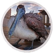 Pelican Close And Low Round Beach Towel