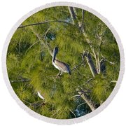 Pelican In The Trees Round Beach Towel