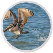 Pelican Taking Off Round Beach Towel