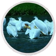 Pelicans Hanging Out Round Beach Towel