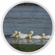 Pelicans In Floodwaters Round Beach Towel