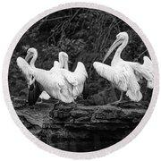 Pelicans Mono Round Beach Towel