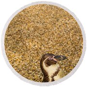 Penguin And Pebbles Round Beach Towel