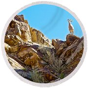 Peninsular Bighorn Sheep From Borrego Palm Canyon Trail In Anza-borrego Desert Sp-ca Round Beach Towel