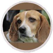 The Beagle Named Penny Round Beach Towel