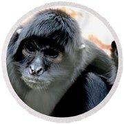 Pensive Monkey Round Beach Towel