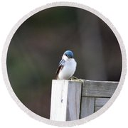 Pensive Tree Swallow Round Beach Towel