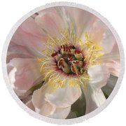 Peonie In Soft Pink Round Beach Towel