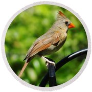 Perched Cardinal Round Beach Towel