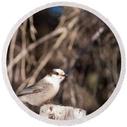 Perched Grey Jay Perisoreus Canadensis Watching Round Beach Towel