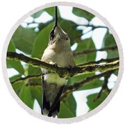 Perched Hummingbird Round Beach Towel