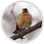 Perched Robin Round Beach Towel