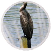 Perching Cormorant Round Beach Towel