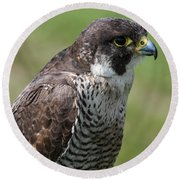 Peregrine Falcon 1 Round Beach Towel